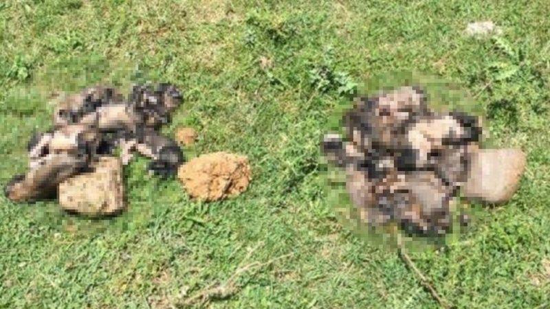 Vahşet: 20 yavru köpeği torbaya koyup dereye atmışlar