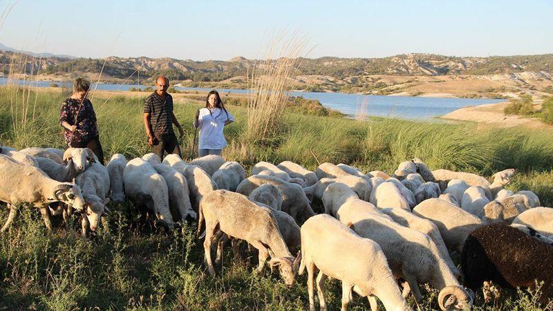 Almanya'dan çoban olmak için Türkiye'ye kesin dönüş yaptılar