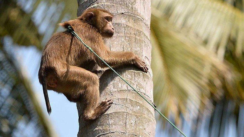 Maymun B virüsü nedir? Kimler risk altında