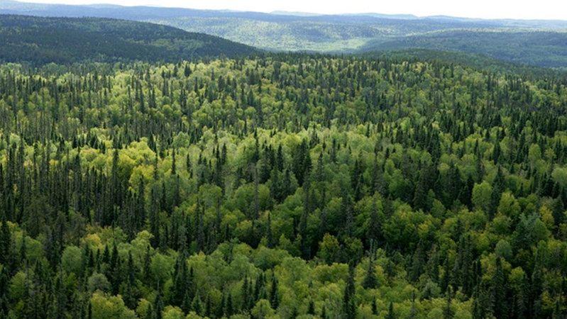 12 ilde orman alanlarına giriş yasaklandı