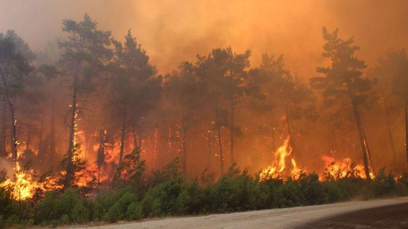 Bakan yangınlardaki son durumu açıkladı