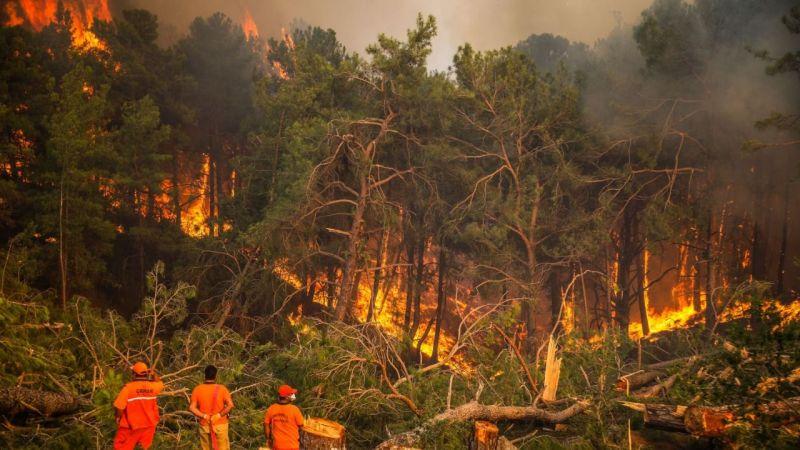 Türkiye'de görülen orman yangınlarında son durum