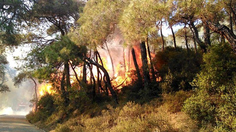 Heybeliada'daki yangından sevindiren haber kontrol altında