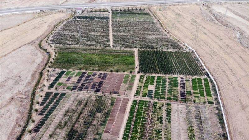 Ağrı Doğubayazıt'ta çorak araziyi bereketlendiren iki arkadaş: Tonlarca meyve ve sebze yetiştiriyoruz