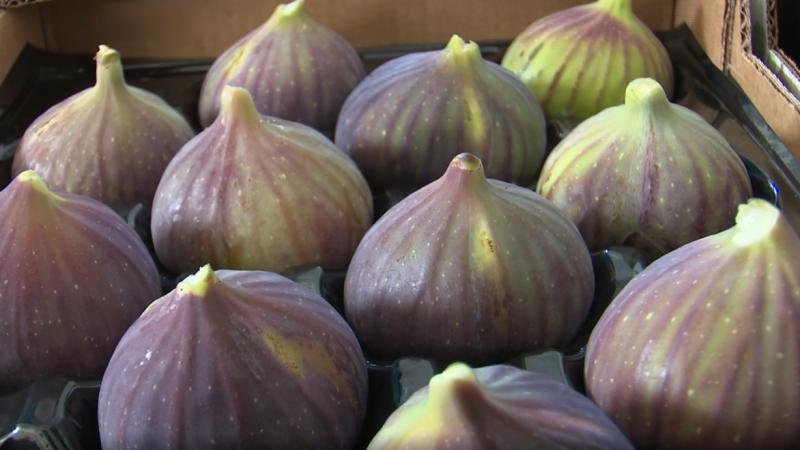 Siyah incir üreticileri fiyatların 30 TL'den 12 TL'ye düşmesine isyan etti