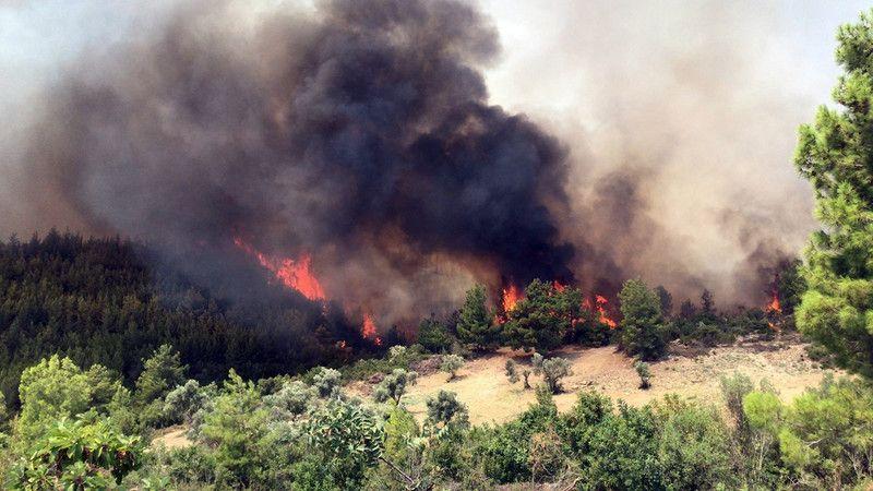 Orman Genel Müdürü Karacabey: Yanan alanlar sonbaharda ağaçlandırılacak