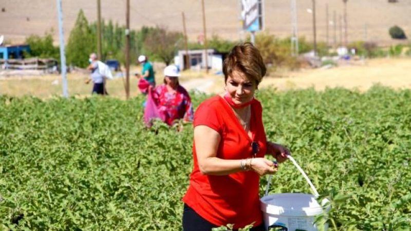 Marketteki fiyat artışlarına kızan çiftçi tarlasını vatandaşlara açtı