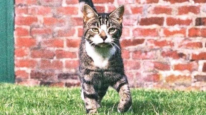 10 yıldır kayıp olan kedi mikroçipindeki telefon numarası ile bulundu