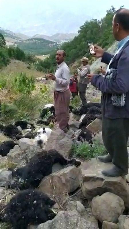 Kurtların saldırısına uğrayan sürüdeki 70 hayvan telef oldu