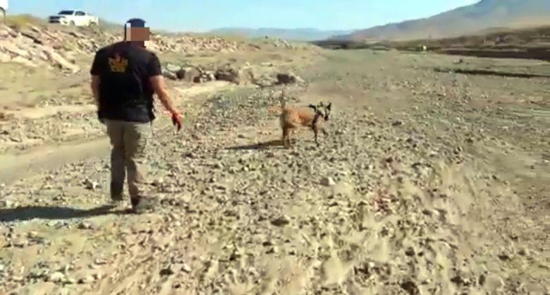 Araziye gizlenen uyuşturucuyu 'Irmak' buldu