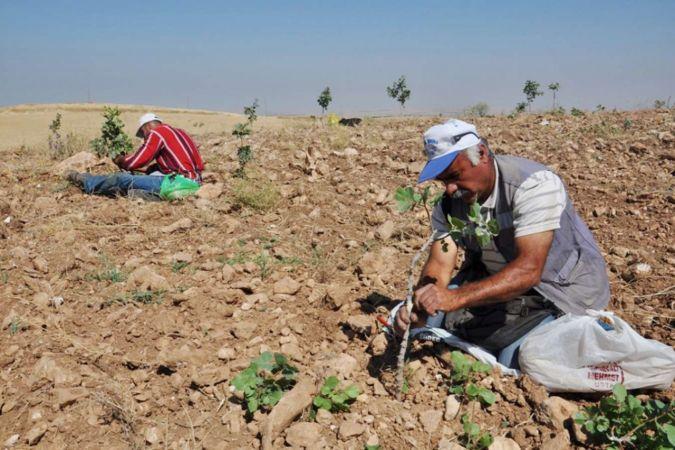 Türkiye'nin yüzde 55'i şiddetli kuraklık yaşıyor