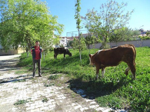 Hisarcık'ta okul bahçeleri hayat oluyor