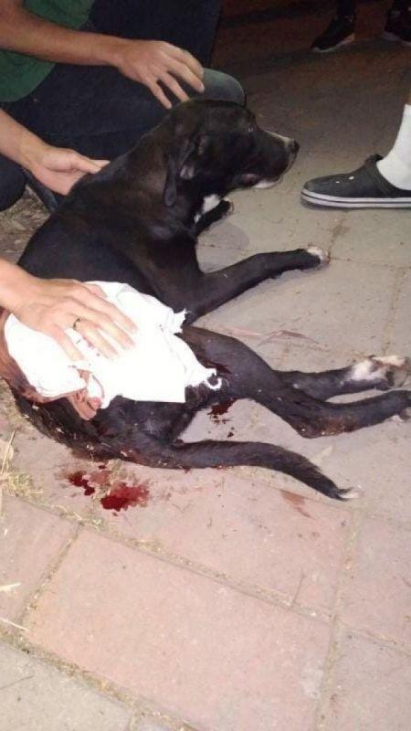 İzmir'de magandalar dehşet saçtı: Tabancadan çıkan mermi köpeğe isabet etti