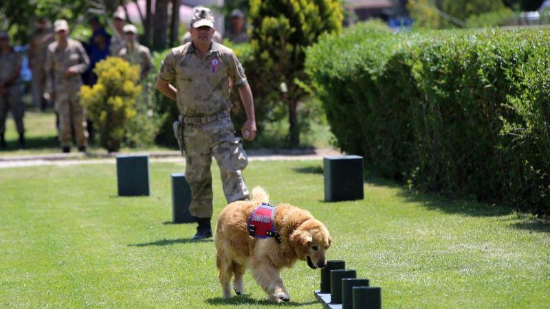 Eğitimli köpeklerin barakaları onarılacak