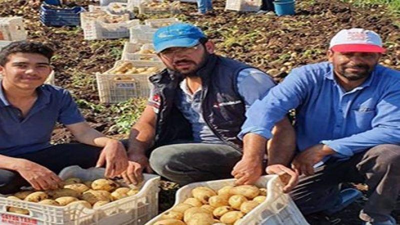 Nevşehir'de patates sezonu açıldı