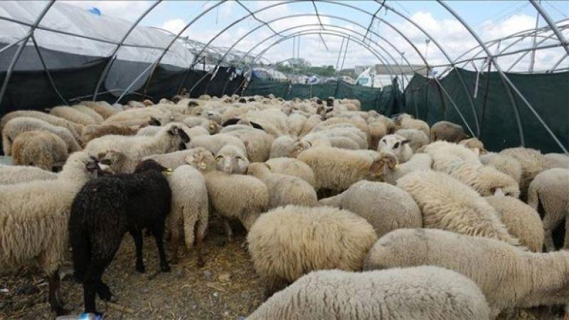 Hayvancılık yatırımları için yüzde 50 hibe geliyor