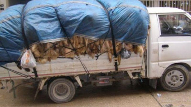 Deri toplama işlemi hayvan pazarında yapılıyor