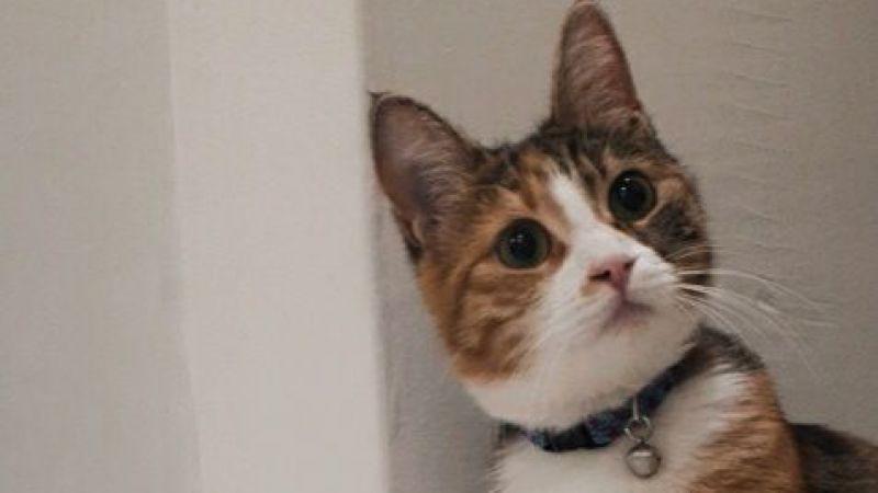 Bu kediyi bulana ödül var!