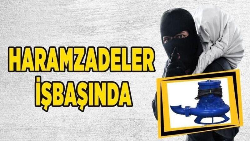 """""""Haramzade hırsızlar işbaşında"""""""