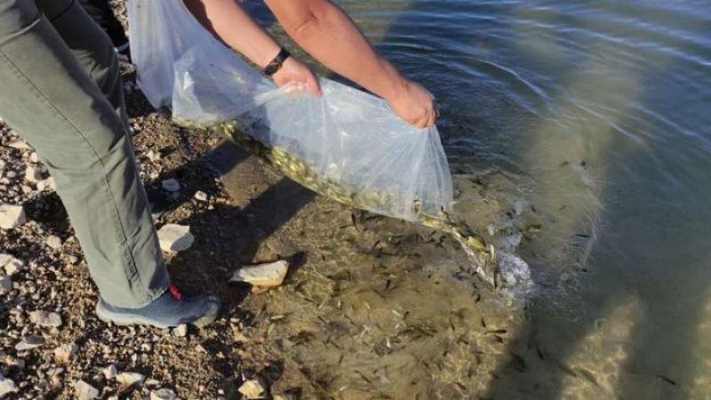 Göletlere 105 bin yavru balık bırakıldı