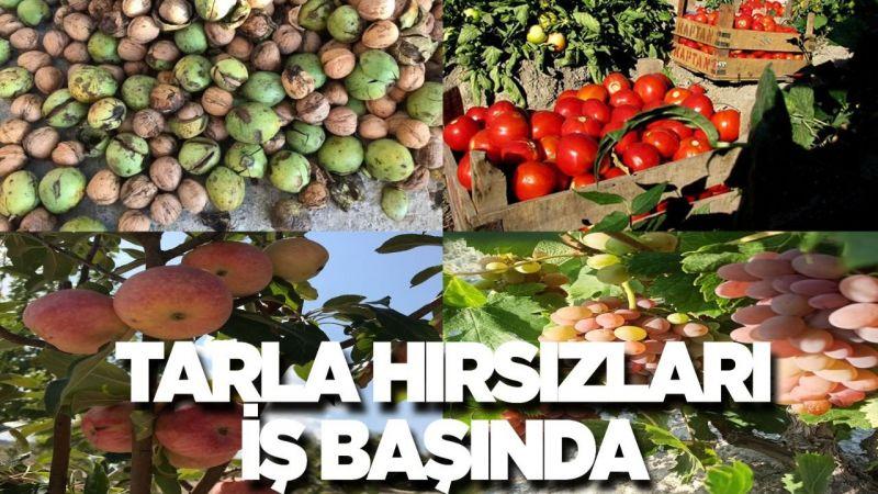 Nevşehir'de çiftçilerin emeğini çaldılar!