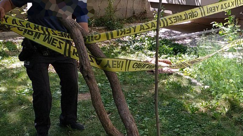 Ağaçtan düşen kadın yaralandı