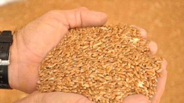 Buğdayda ithalat rekoru! Milyarlarca dolar dışarıya gitti