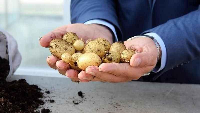 Ekonomi Bakanı açıkladı! İç savaştaki Suriye'den patates ithal edildi