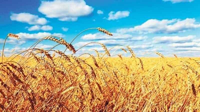 Resmi Gazete'de yayımlandı: 1 milyon ton buğday ithal edilecek