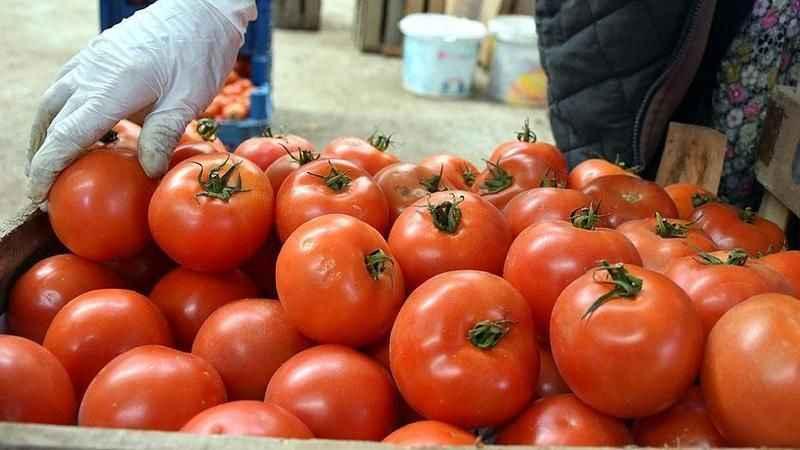 Rusya'dan yeni domates hamlesi: Yerli üreticiyi vuracak