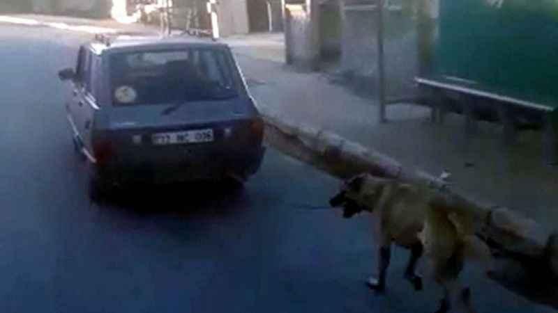 Köpeği otomobile bağlayıp, koşturdu