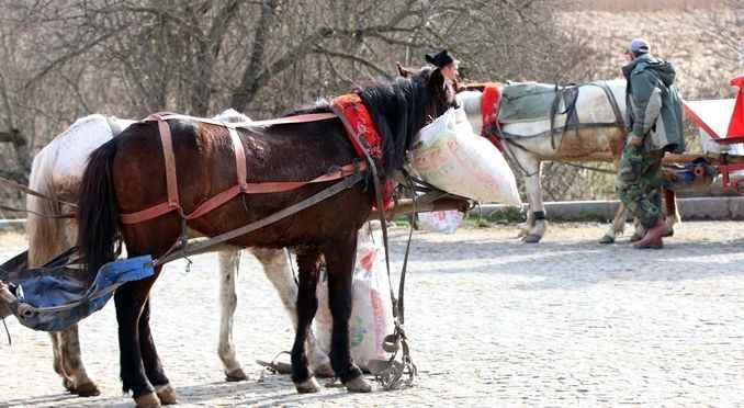 Ruam hastalığı tehlikesi! Bolu'da 8 at karantinaya alındı