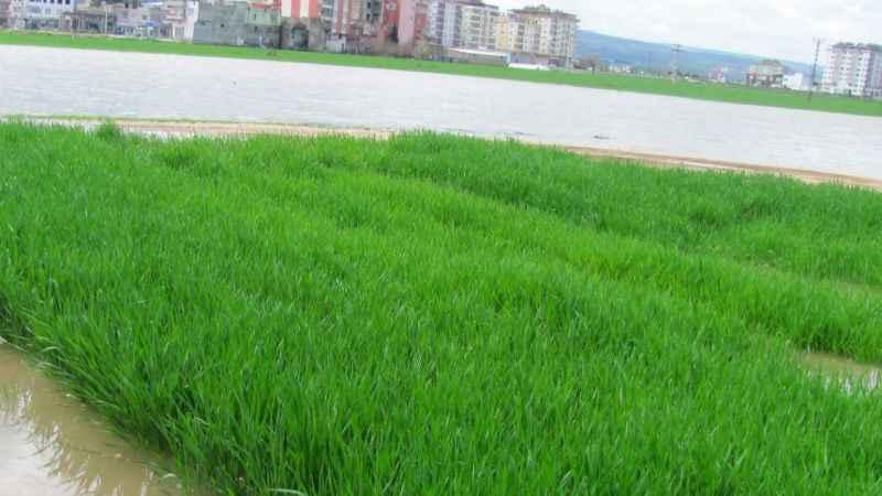 Şiddetli yağış tarım alanlarını göle çevirdi!