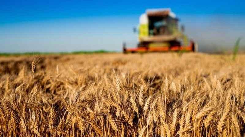 """FAO Temsilci: """"Dünya gıda sanayini zorlu bir dönem bekliyor"""""""