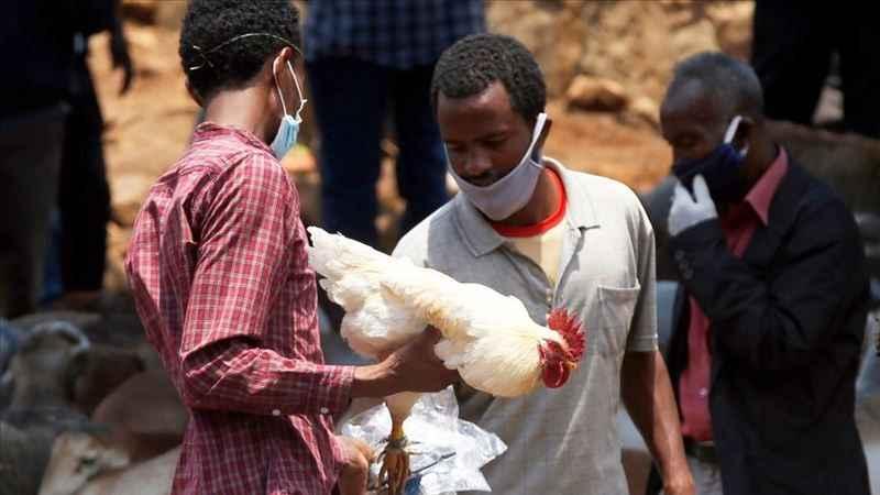 Etiyopya için sarı humma salgını uyarısı