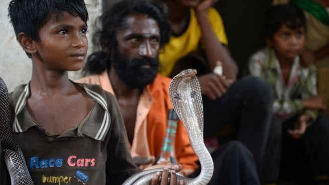 Hindistan'da 20 yılda 1.2 milyon kişi yılan ısırığından öldü
