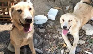 Tek kelimeyle vahşet! Bıçakladığı köpeği serbest kalınca öldürdü