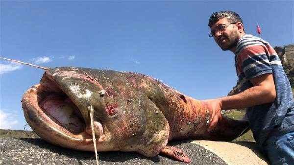 Kars'ta iki kardeş oltalarına gelen balığı görünce şaşkına döndü!