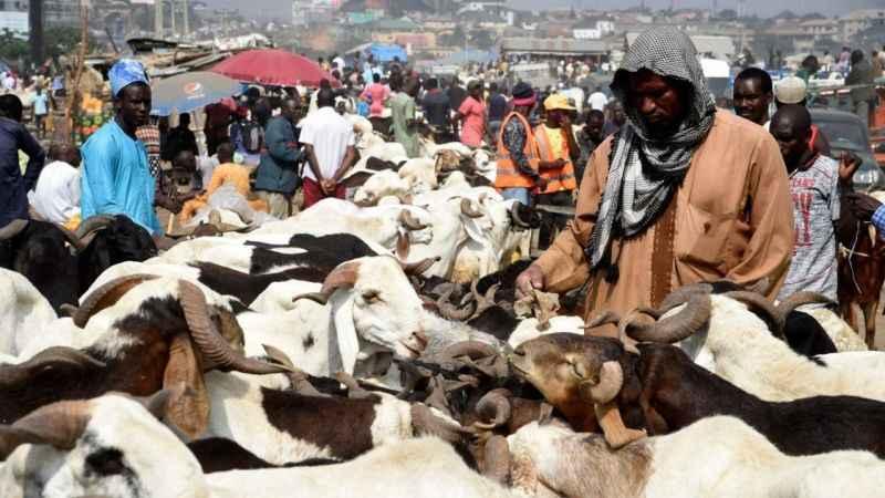 Nijerya'da çobanlarla çiftçilerin savaşına ordu müdahale etti: 80 ölü