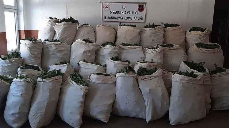 1 milyon 119 bin kök kenevir ve 756 kilogram esrar ele geçirildi