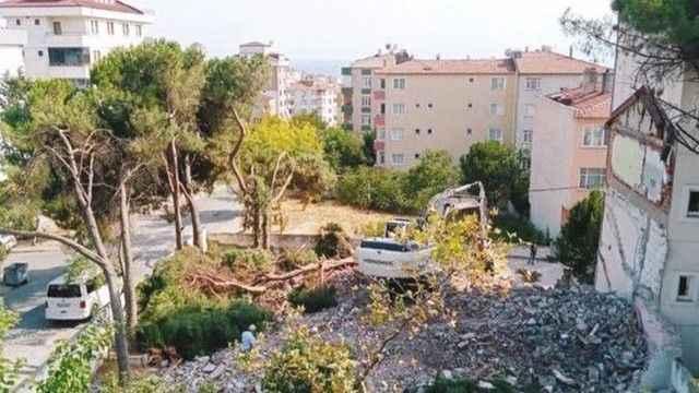 İstanbul'da ağaç katliamı! ''Cezası neyse öderiz'' dediler!