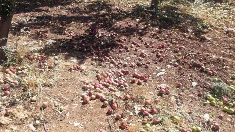 Kahramanmaraş'ta yaşanan fırtına meyve ağaçlarına zarar verdi
