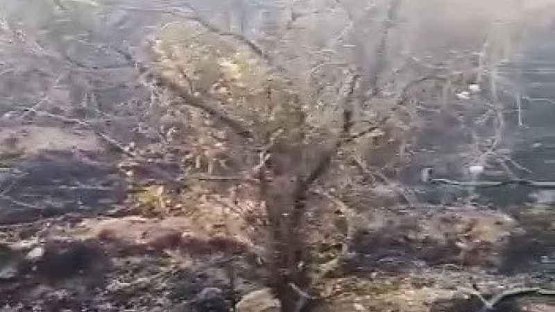 Adıyaman'da orman yangını korkuttu