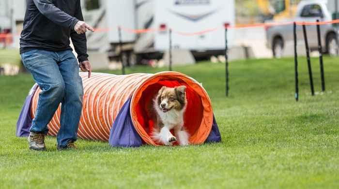 Avrupa standartlarında köpek eğitim merkezi: Positive Dogs