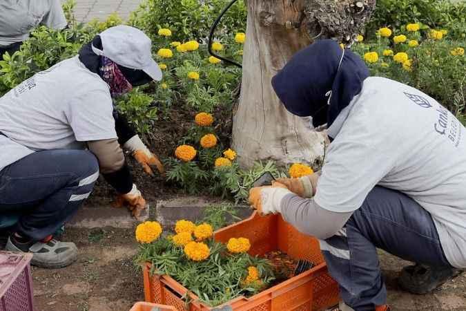 Baharın renkleri Çankaya'da açıyor