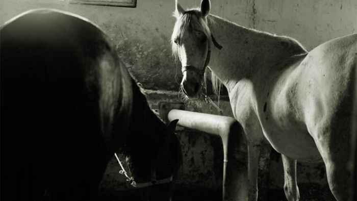 İBB'den kaybolan 50 atla ilgili açıklama Sorumluluk bizde değil...