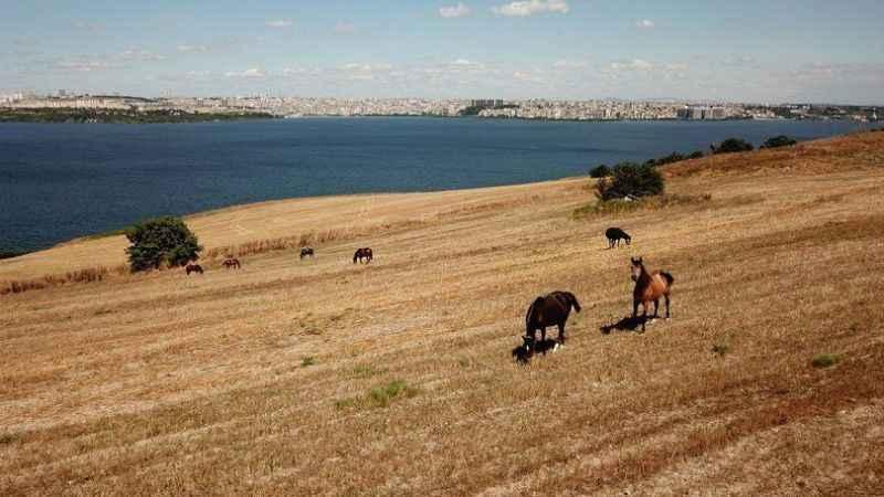 Kayıp 100 at soruşturması: Teslim edilen kişi atları elinden kaçırmış!