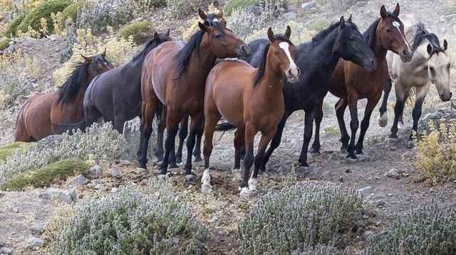 İBB'nin kayıp atlarında flaş gelişme! MHP'den istifa açıklaması