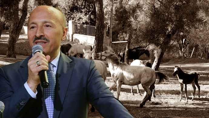 AK Parti İstanbul'dan Adalar'ın atlarıyla ilgili flaş iddialar