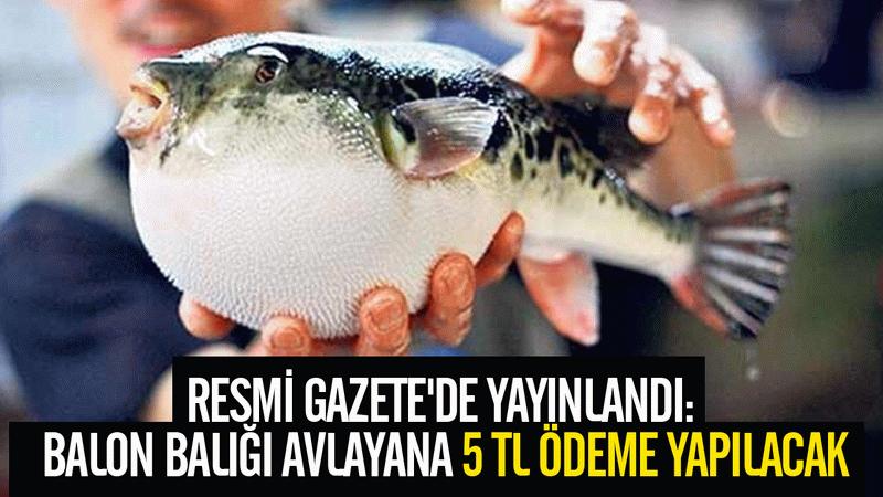 Resmi Gazete'de yayınlandı: Balon balığı avlayana 5 TL ödenecek